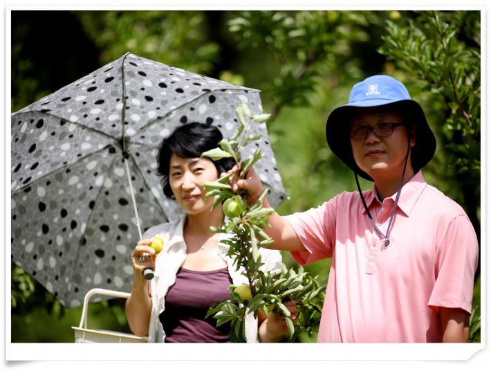 남경오디세이 자두수확체험 현장 사진입니다^^